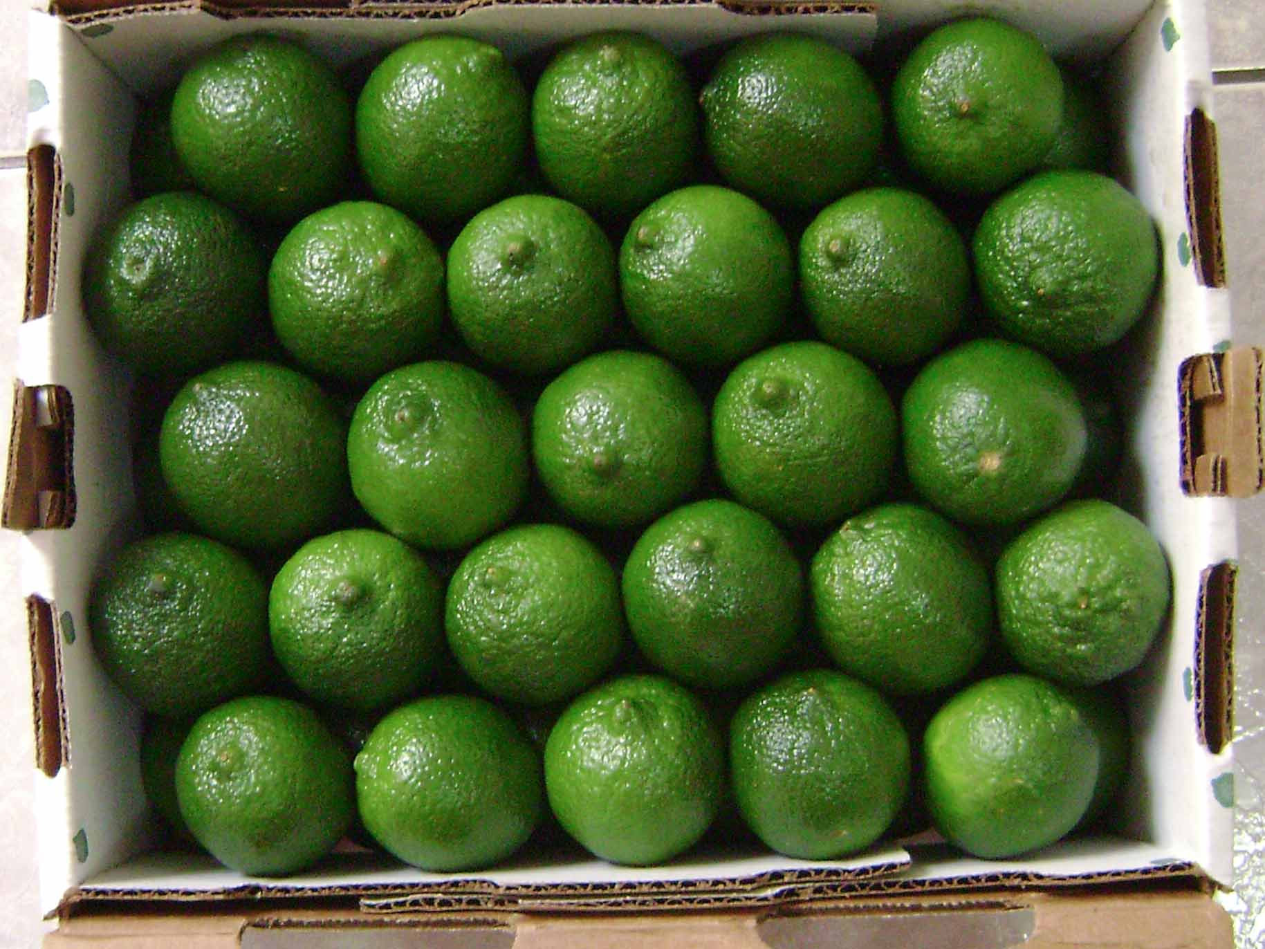 Seedless Lemon with best price