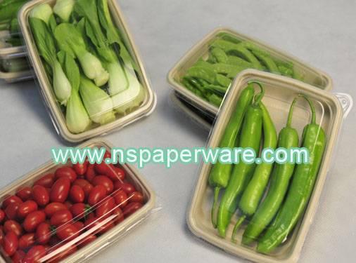 sugarcane paper tray disposable