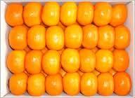 High Quality Fresh Sweet Navel Oranges
