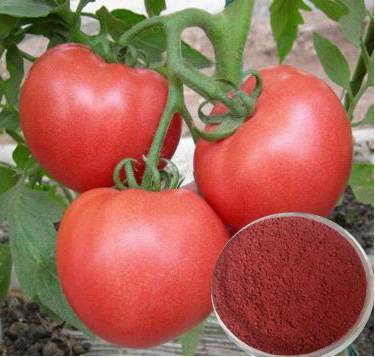 Lycopene(Tomato Extract), Lycopersicon esculentum