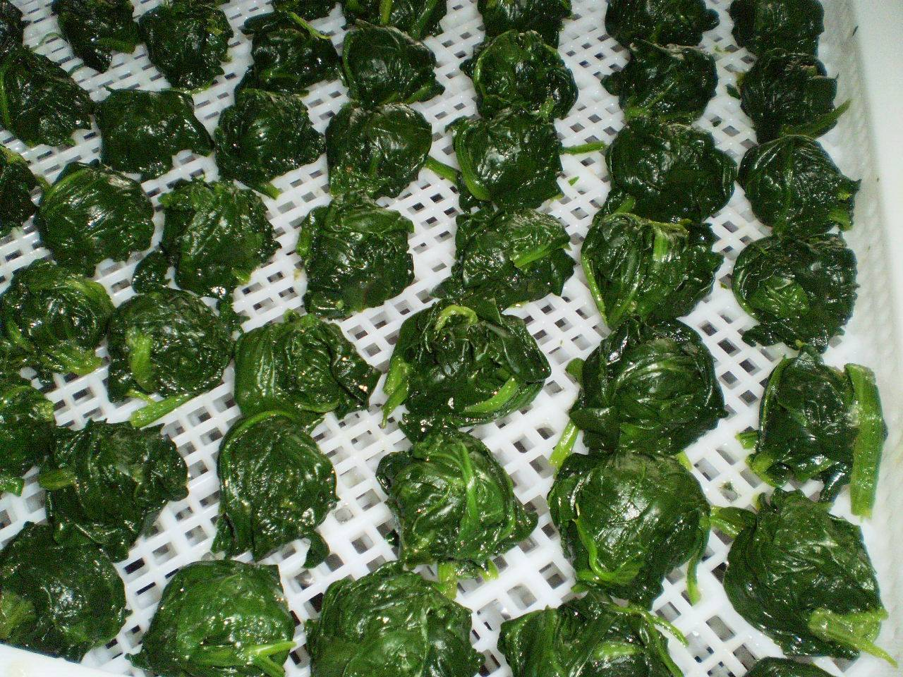 IQF leaf spinach