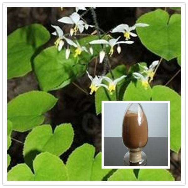 Icariin 98% Epimedium Extract GMP factory