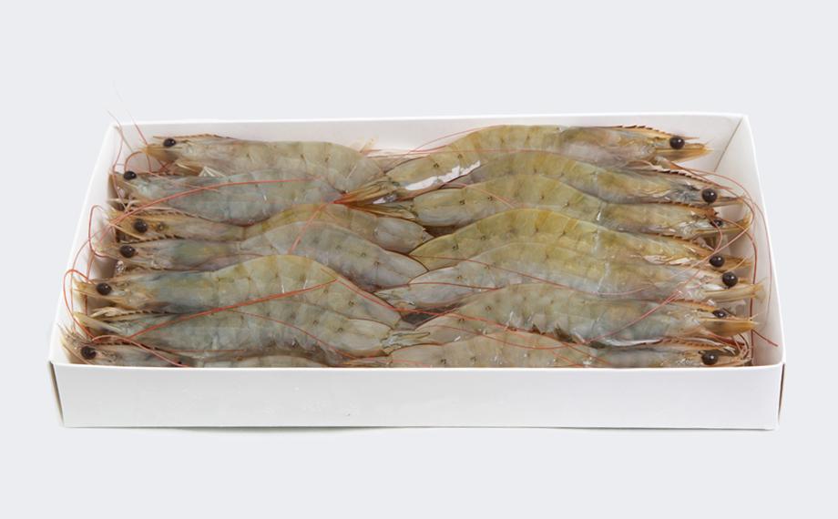 Frozen shrimps HOSO