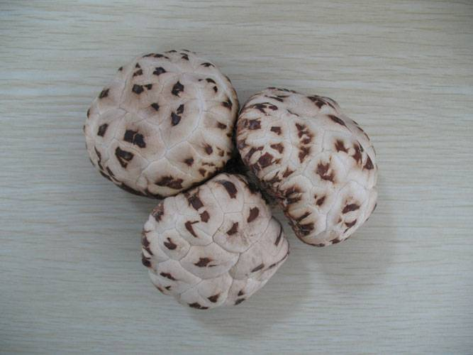 dried brown shiitake mushroom