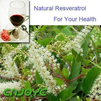 Resveratrol   Specs. 50%, 98%   CAS NO. 501-36-0