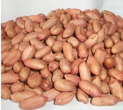 chinese peanut kernels,new crop