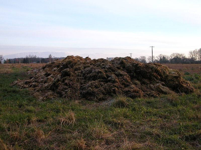 Cow Dung Exporters, Suppliers of Cow Dung, Indian Export Price Of Cow Dung Manure