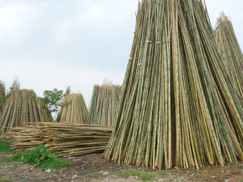 natural bamboo poles, cheap bamboo poles, nice bamboo pole, bamboo poles high quality