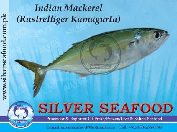 INDIAN MACKEREL/RAZOR CLAM/CRABS/SHELLS