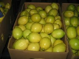Fresh Eureka Lemon