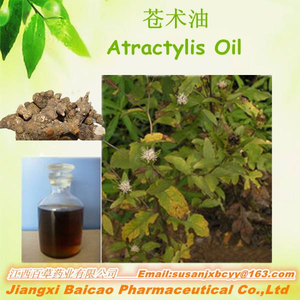 High quality rhizoma atractylodis extract oil Chinese atractylode oil Atractylis oil