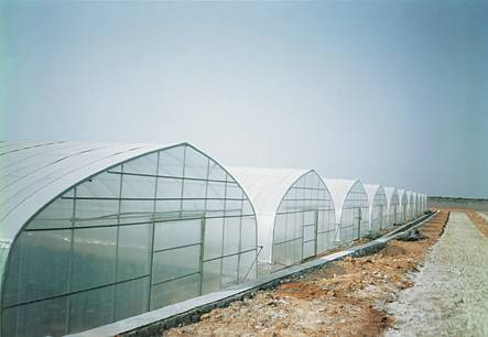 Clear Plastic Greenhouse Film