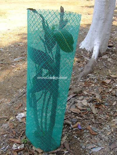 Corflute tree guards