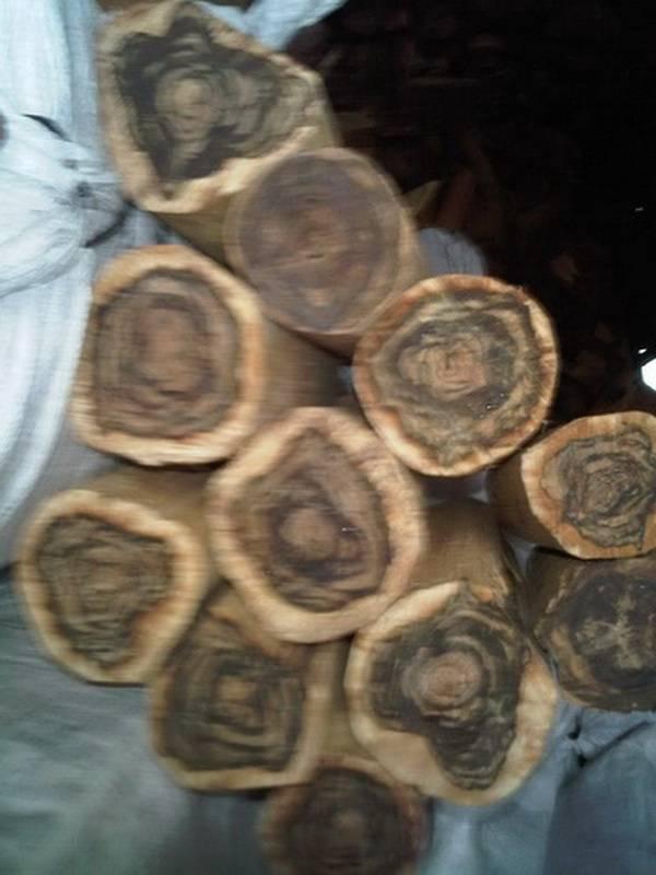 agar wood