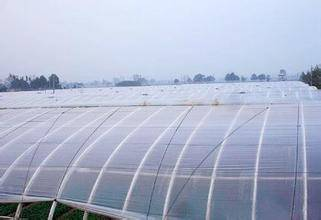 Agriculture Greenhouse Covering Film