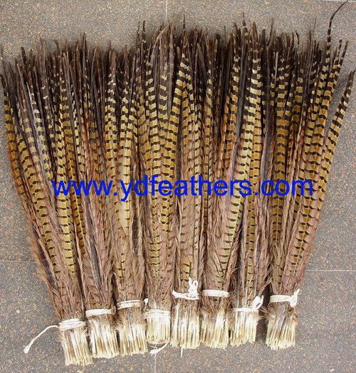 Ringneck Pheasant Tail feather