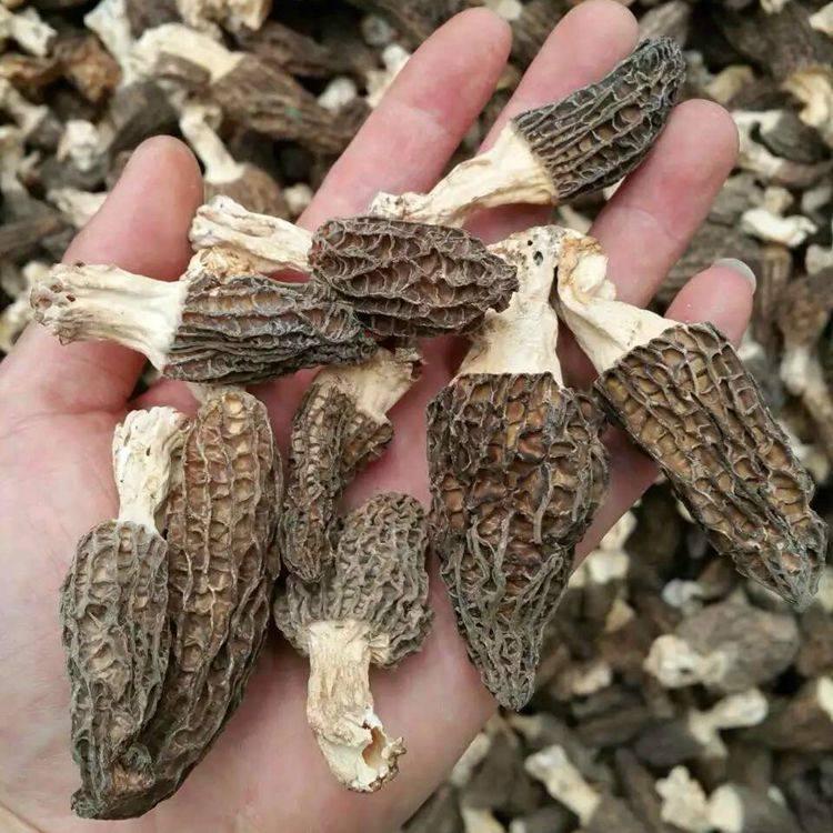 Dried Morel Mushroom with Stem 2CM