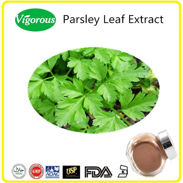 Pure Natural Parsley Leaf Extract/ Petroselinum crispum Extract/ Parsley Leaves Powder