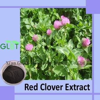 Red Clover Extract GMP Supplier