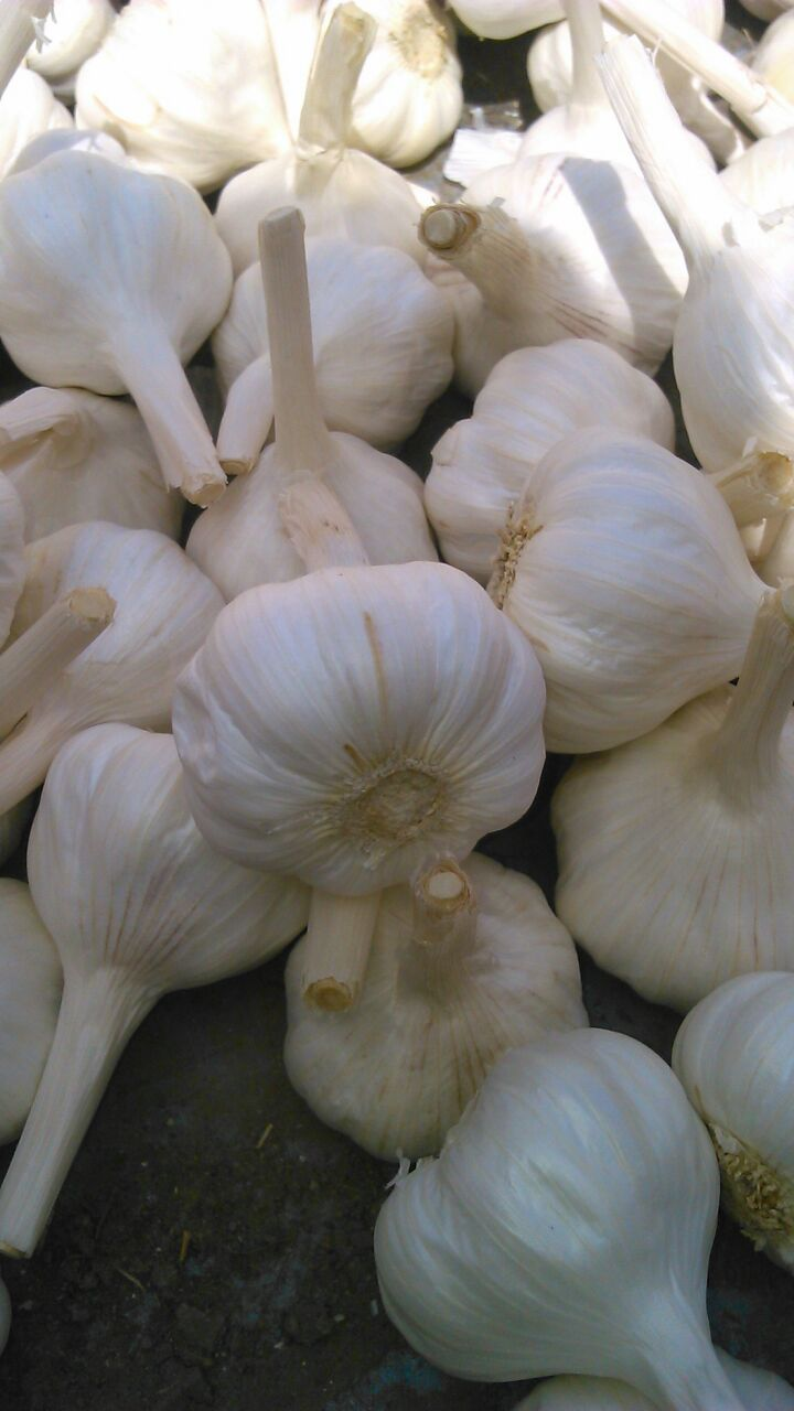 Dry Garlic is popular herb has widen medicinal benefits. Being bulk suppliers of garlic and dry garl