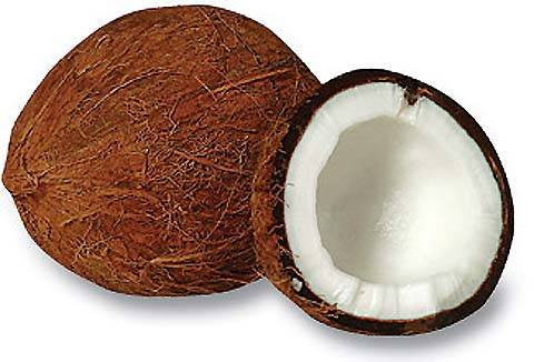 Fresh Coconut for sale