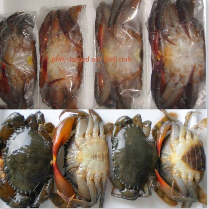 soft shell crab( alive frozen seafood)