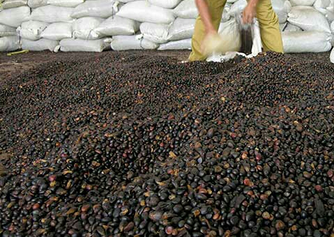 Palm oil and palm kernel shell