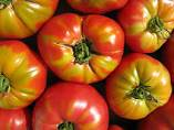 NEED AN IMPORTER FOR TOMATO