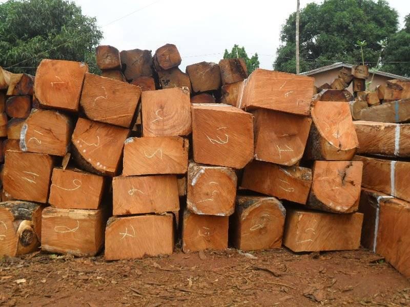 Kosso Wood, Round Logs, Sawn Square Logs