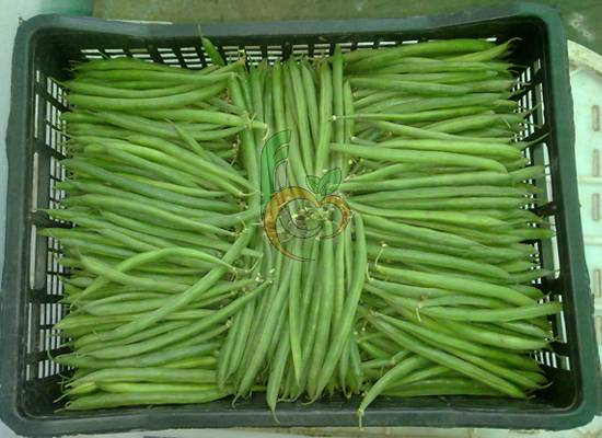Egyptian green beans by fruit link