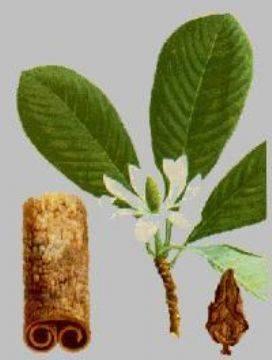 Magnolia Cortex extract