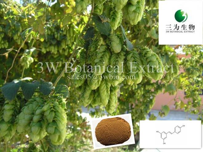Hop Flower Extract(sales05 AT 3wbio DOT com)