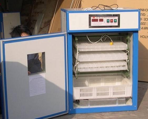 supply egg incubator of 264 eggs