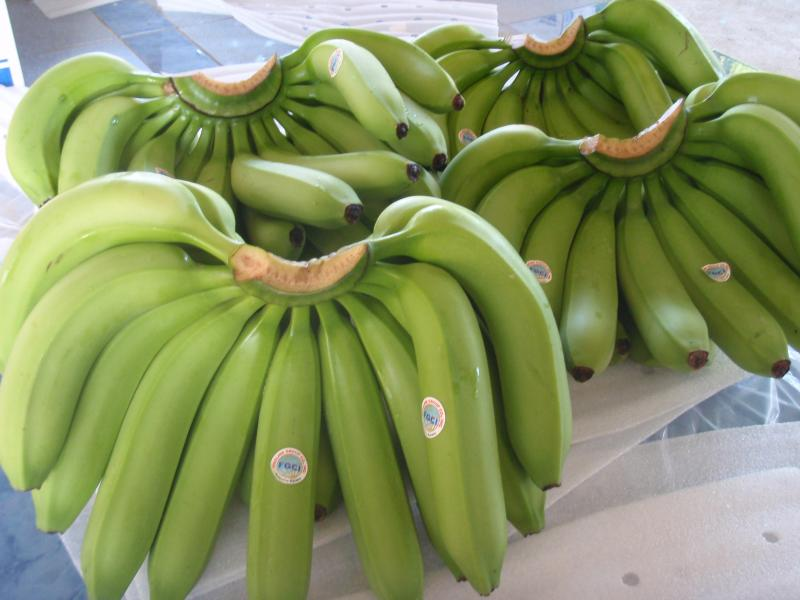 Cavendish Bananas for sale