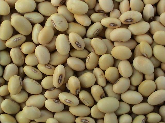Chinese Soya Beans