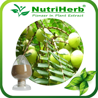 Phyllanthus emblica Extract/Phyllanthus Emblica Fruit Extract Powder/Amla Extract10:1