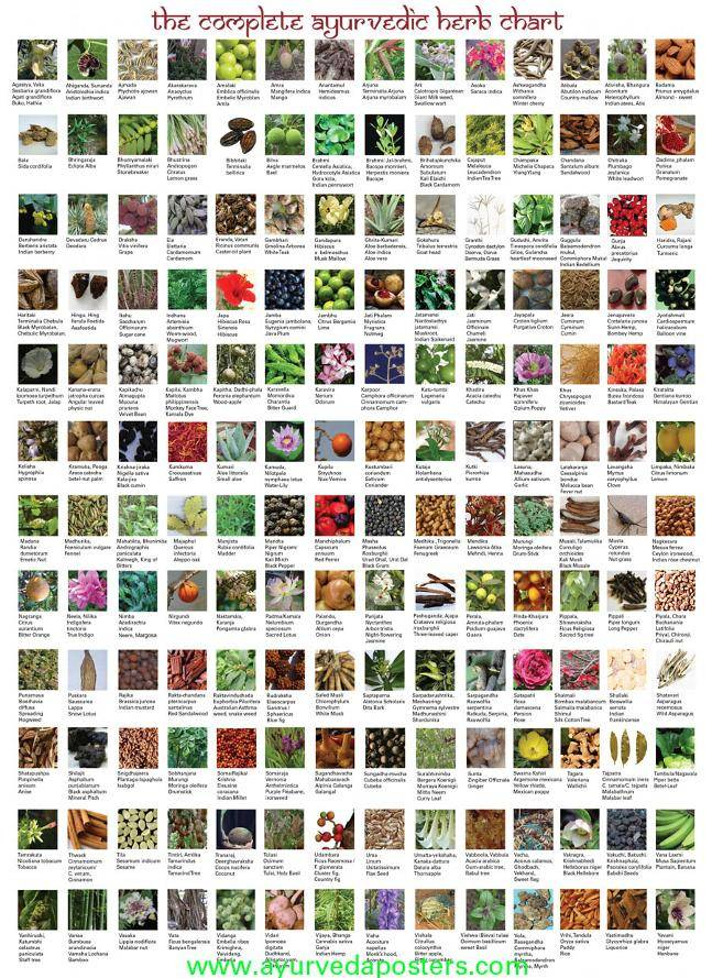 All Kind of Plant Seed,Oil seed,Herbal Extract