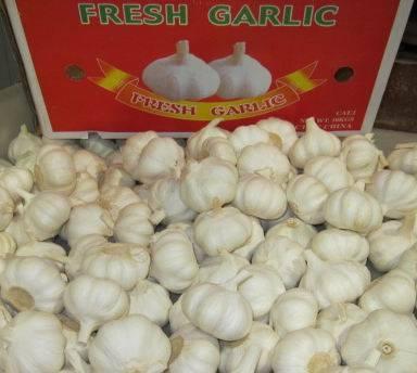 China fresh garlic