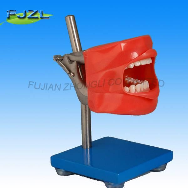 Dental Manikin Simulator Phantom Head