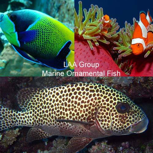 Marine Ornamental Fish