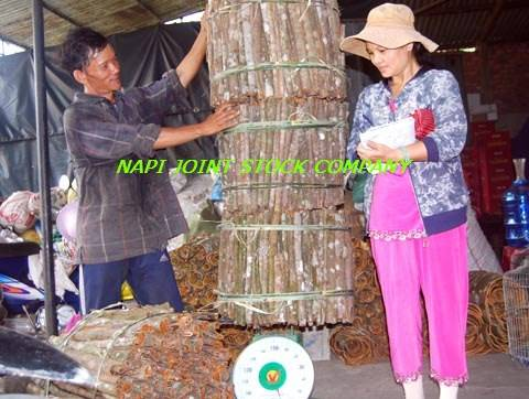 Sell Tube Cassia from VIENAM