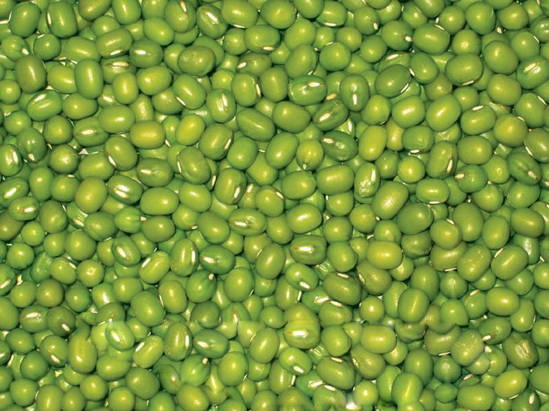 sell high quality green mung beans