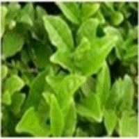Botanical Complex Extracts(KM Multi-ployphenol)