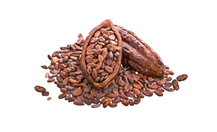 we can supply cocoa beans direct from farmers