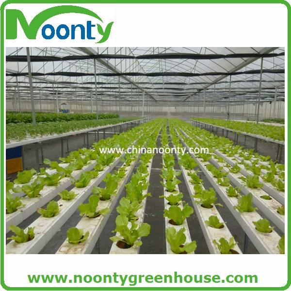 Farm Hydroponics-NFT