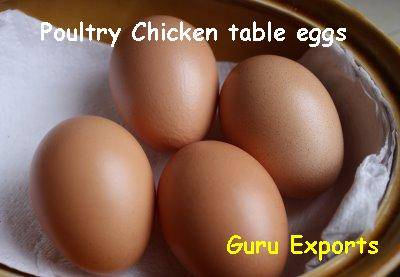 CHICKEN FARM EGGS, POULTRY INDIAN EGGS EXPORT TAMIL NADU