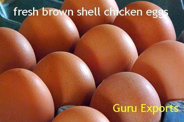 BROWN EGGS POULTRY FARM INDIA, CHICKEN EGG SUPPLIERS