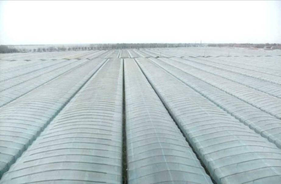 Agriculture Poly Greenhouse Film