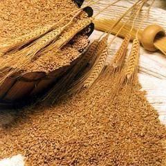 Feed grade Wheat Bran