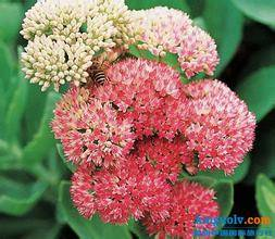 Sell High Quality Rhodiola Rosea Extract